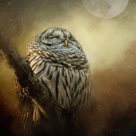 Jai Johnson - Owl In The January Moon