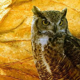 Owl by Teresa Zieba