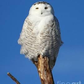 Heather King - Owl Totem