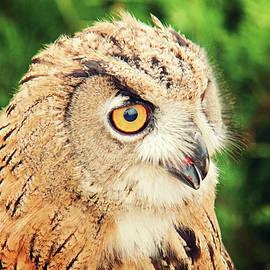 Svetlana Yelkovan - Owl