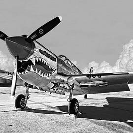 P-40 Warhawk - Flying Tigers by Weston Westmoreland