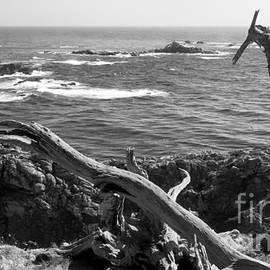Rick Maxwell - Pacific Driftwood