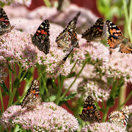 Painted Ladies Gathering by Shelly Gunderson