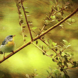 Painted Parula by Judy Vincent