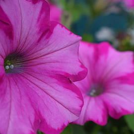 Jimmy Chuck Smith - Painted Pink Patunia
