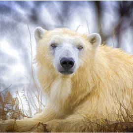 LeeAnn McLaneGoetz McLaneGoetzStudioLLCcom - Painted Polar Bear