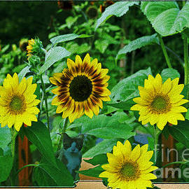 Linda Troski - Painted Sunflowers