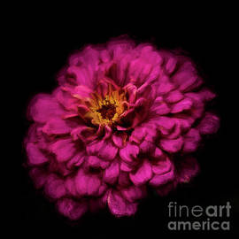 Painted Zinnia 2018 by Darren Fisher