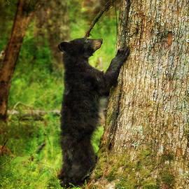 Paintography - Bear Ready To Climb Tree by Dan Friend