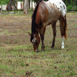 Palamino Horse Two by Rosalie Scanlon