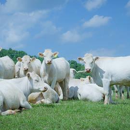 Pale Herd by Jim Love