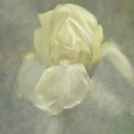 Lois Bryan - Pale Misty Iris