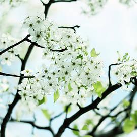 Jessica Jenney - Pale Pear Blossom