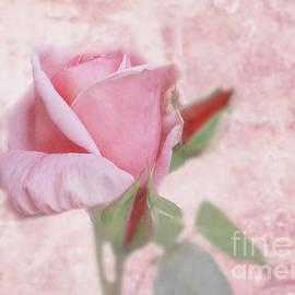 Victoria Harrington - Pale Pink Rose