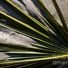 Palm And Sand by Susanne Van Hulst