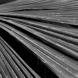 Heidi Fickinger - Palm Frond Architecture # 2