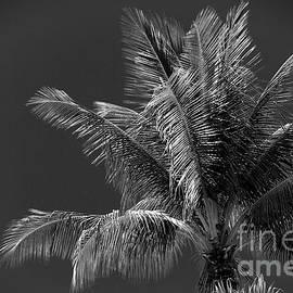 Palm Beauty Monochrome Lahaina by Sharon Mau