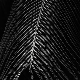 Palm Leaf by Deborah Benoit