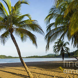 Palm Lined Beach by Oscar Gutierrez