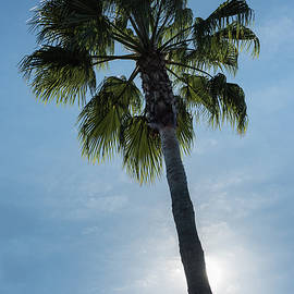 Steve Gadomski - Palm Tree California