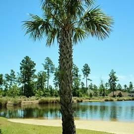 Cynthia Guinn - Palm Tree