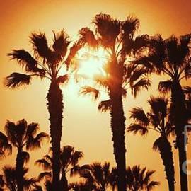 Palm Tree Dreams by Jenny Revitz Soper