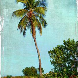 Greg Kluempers - Palm Tree Ft Myers FL_DSC00702_16