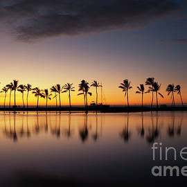 Palm Tree Grove at Ku'uali'i Hawaiian Fishpond by Charmian Vistaunet