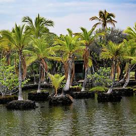 Palm Tree Islands by Pamela Walton