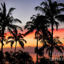 Palm Tree Silhouettes by Trudee Hunter