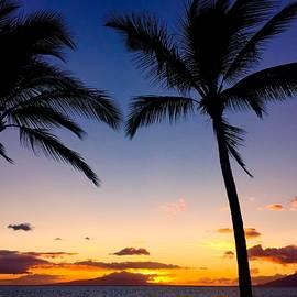 Trevor Taylor - Palm Tree Sunset