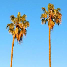 #palm #trees At Sunset. #california