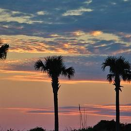 Cynthia Guinn - Palm Trees At Sunset