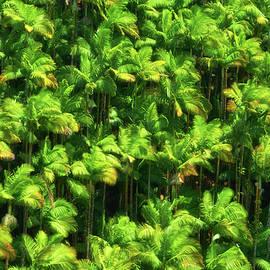 Palm Trees - Christopher Johnson