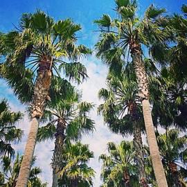 #palm #trees Just Make Me #smile