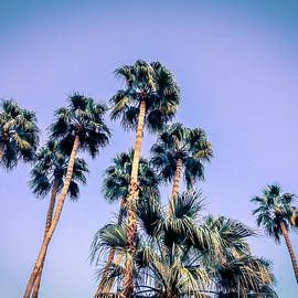 Amyn Nasser - Palm Trees Palm Springs Summer