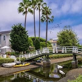 Palms and Egrets at the Venice Canals by Lynn Bauer
