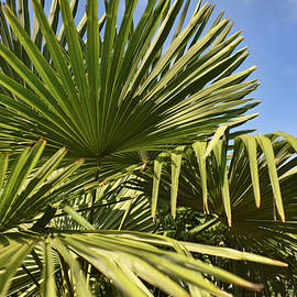 Palms Up by Paulette B Wright