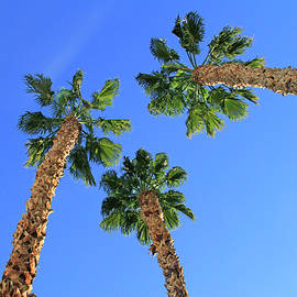 Palms Up by Shoal Hollingsworth