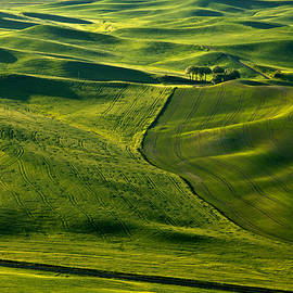 Palouse Patterns by Mike  Dawson