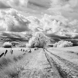 Bob Neiman - Palouse Road and Tree IR 0996