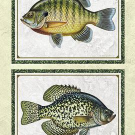 Panfish Id by Jon Q Wright