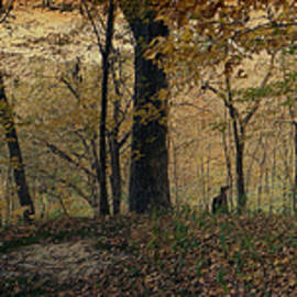Thomas Woolworth - Panorama 2015 Autumn In The Woods Textured