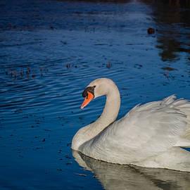 Linda Howes - Papa Swan Is Back