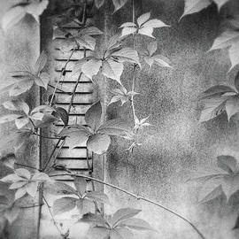 Andrey Godyaykin - Parallel botany #0810