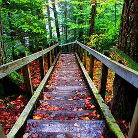 Michael Rucker - Park Trail