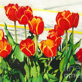 Parking Lot tulips by Barbara Jewell
