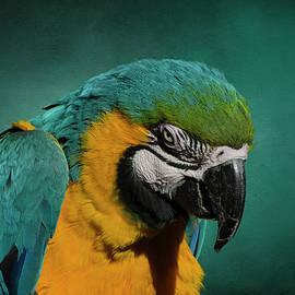 Audran Gosling - Parrot Portrait