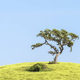 Paso Robles - Solitary Valley Oak by Alexander Kunz