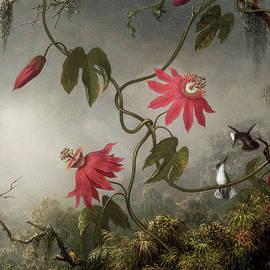 Passion flowers - Martin Johnson Heade